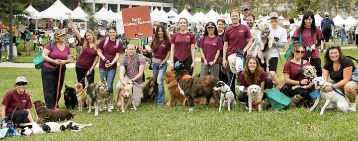 FORTE Animal Rescue Volunteers