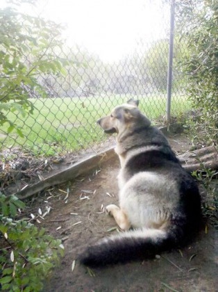 Henry watches the bunnies