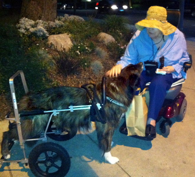 Definition of animal rescuer - Forte Animal Rescue : Forte
