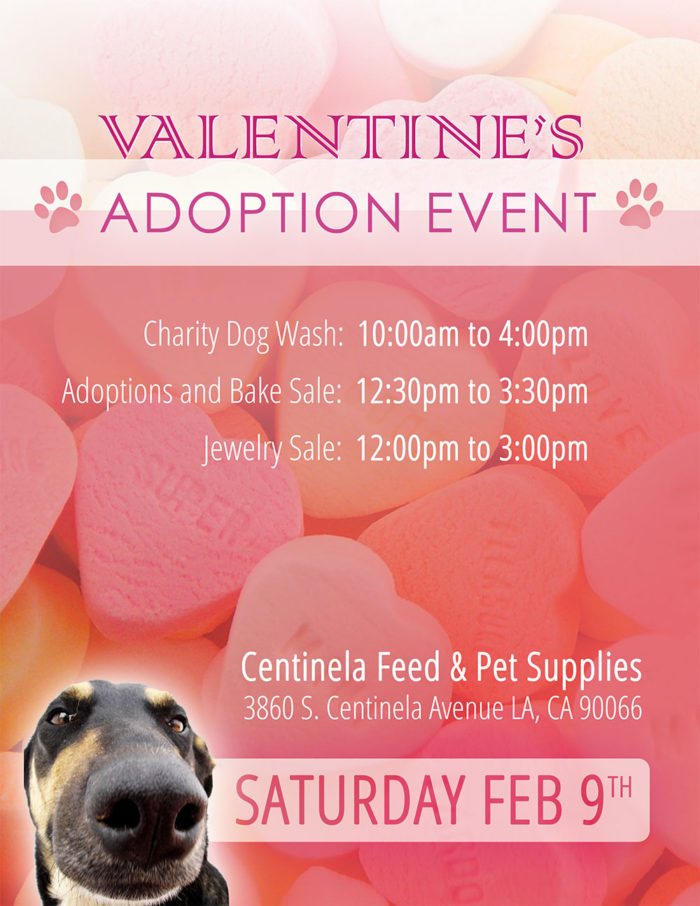 Valentine's Adoption Event - Saturday Feb 9th