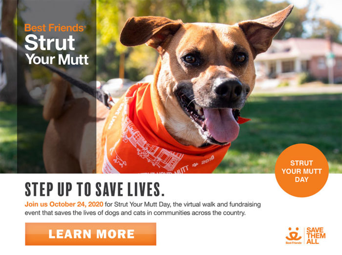 Strut Your Mutt 2020